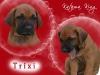 trixi_0